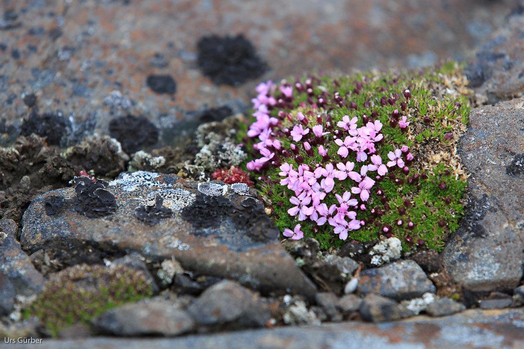 Spitzbergen-1.jpg