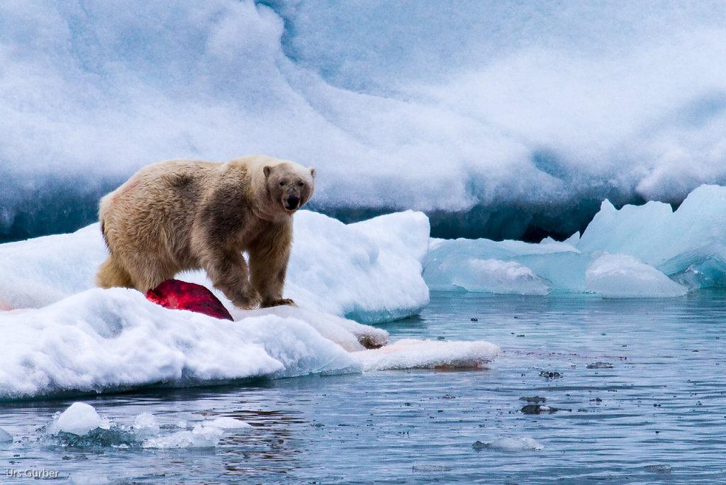 Spitzbergen-4.jpg